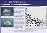 BAC clone browser