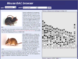 BAC clone browser